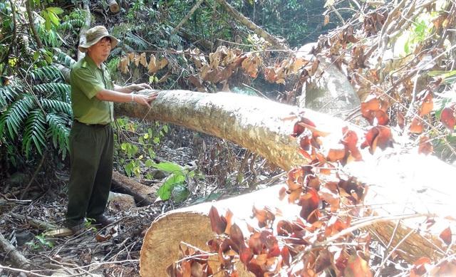 Phú Yên: Điều tra các đối tượng ngang nhiên mở đường để phá rừng - Ảnh 4.