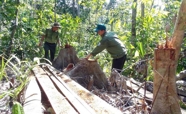 Phú Yên: Điều tra các đối tượng ngang nhiên mở đường để phá rừng - Ảnh 5.