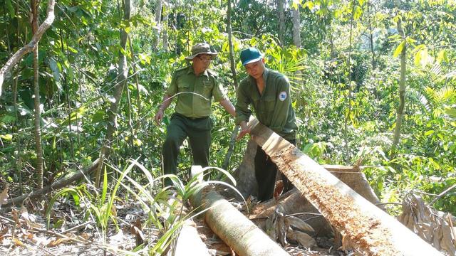 Phú Yên: Điều tra các đối tượng ngang nhiên mở đường để phá rừng - Ảnh 1.
