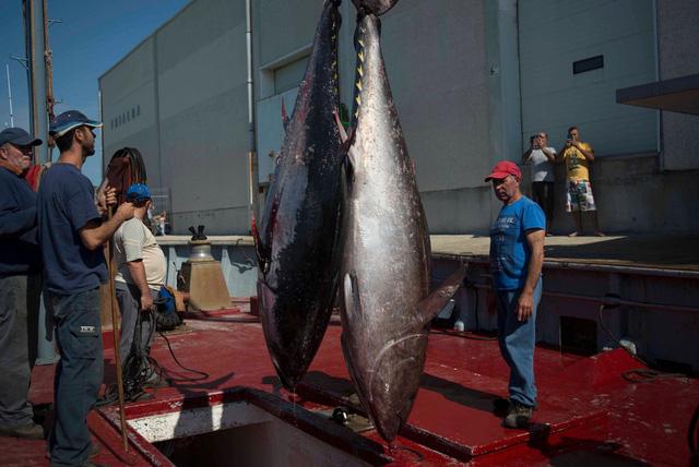 Xuất khẩu cá ngừ Tây Ban Nha giảm do ảnh hưởng bởi COVID-19 - Ảnh 2.