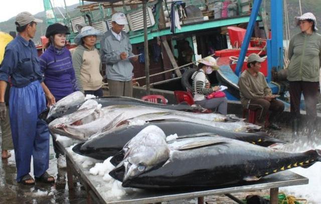 EU sẽ miễn thuế cho 11.500 tấn cá ngừ đóng hộp sang EU - Ảnh 1.