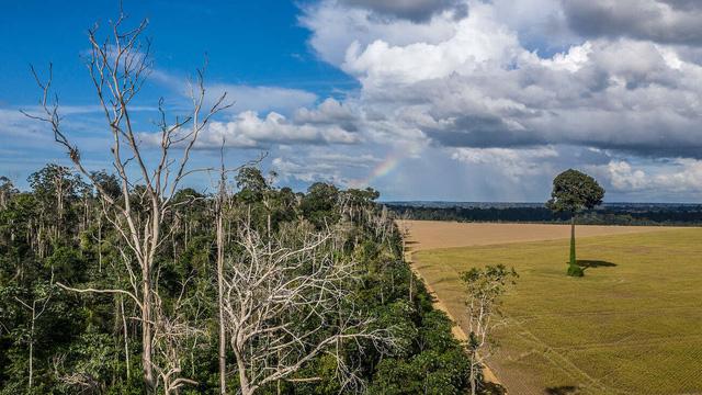Những nguy cơ mới từ sự xuống cấp của rừng Amazon - Ảnh 3.
