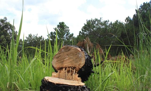 Khó khăn trong công tác quản lý, bảo vệ rừng: Giảm số phụ, tăng mức độ nghiêm trọng - Ảnh 1.