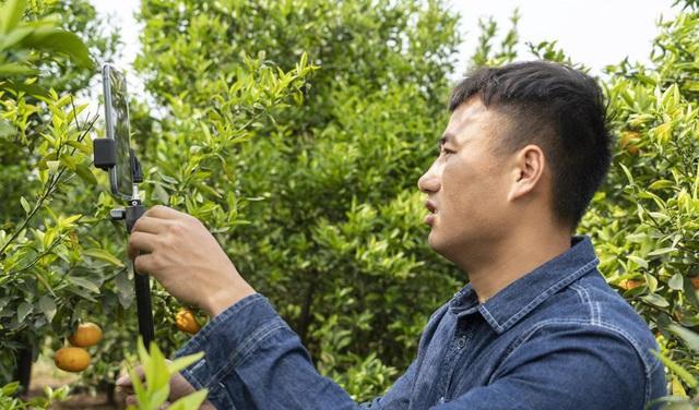 """Nông dân Trung Quốc """"ăn nên làm ra"""" nhờ bán nông sản trực tuyến - Ảnh 2."""