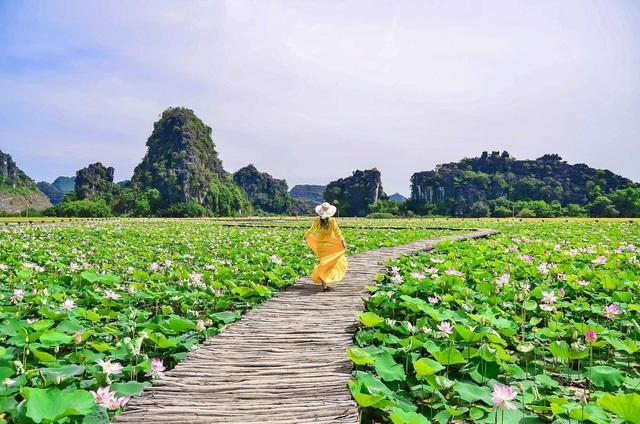 Con đường gỗ giữa hồ sen ở Hang Múa gây sốt vì vẻ lãng mạn - ảnh 1