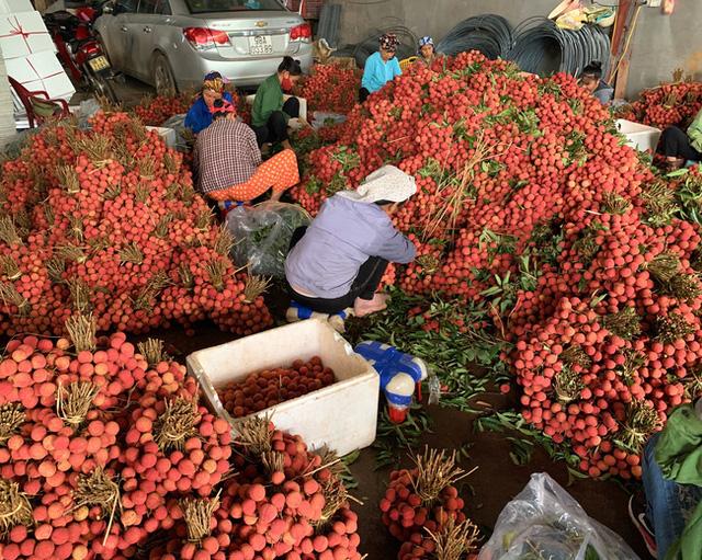 Nâng tầm giá trị trái vải Việt Nam trên thị trường quốc tế - Ảnh 1.