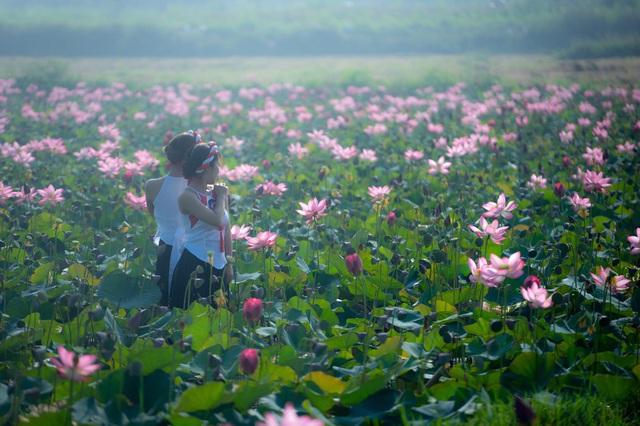 Đẹp mê mẩn hồ sen Điện An của Quảng Nam - Ảnh 20.