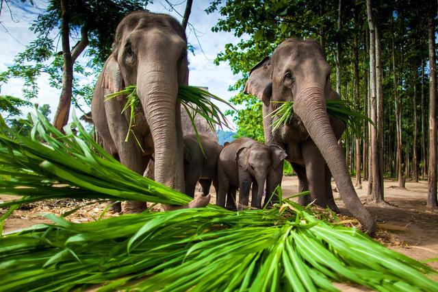Bảo tồn thiên nhiên, Thái Lan đóng cửa công viên 133 quốc gia - ảnh 2