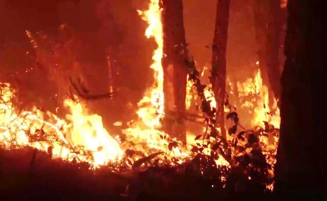 Cháy rừng diễn biến phức tạp ở Diễn Châu, Nghệ An - Ảnh 2.