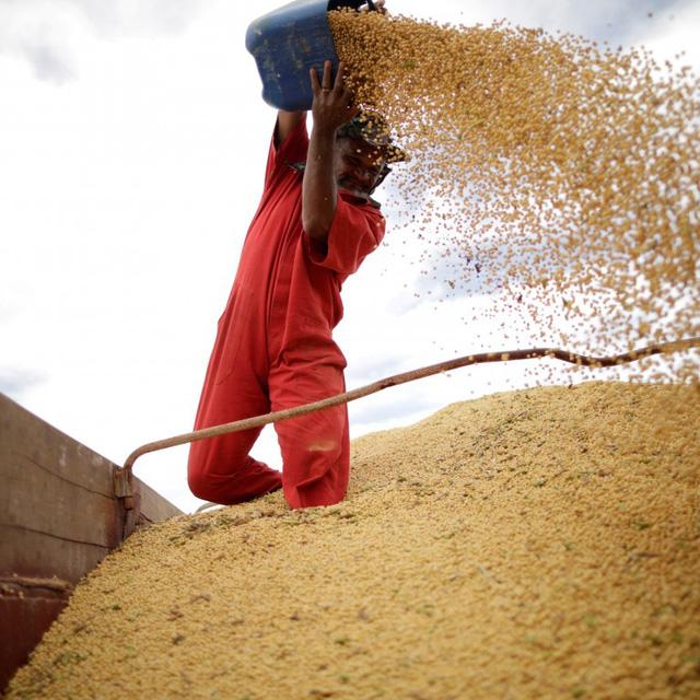 Trung Quốc mua hàng trăm nghìn tấn đậu nành của Mỹ - Ảnh 1.