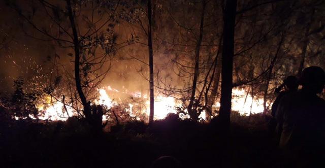 Nguy cơ cháy rừng tại Nghệ An, Hà Tĩnh vẫn ở mức báo động cực kỳ nguy hiểm - Ảnh 1.