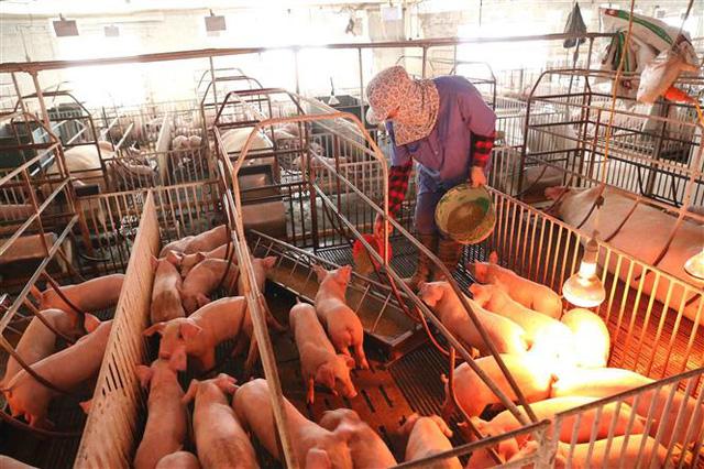 Hạ nhiệt sau nhiều ngày cố thủ: Thịt lợn giá rẻ sắp không chỉ còn có trên tivi - ảnh 3