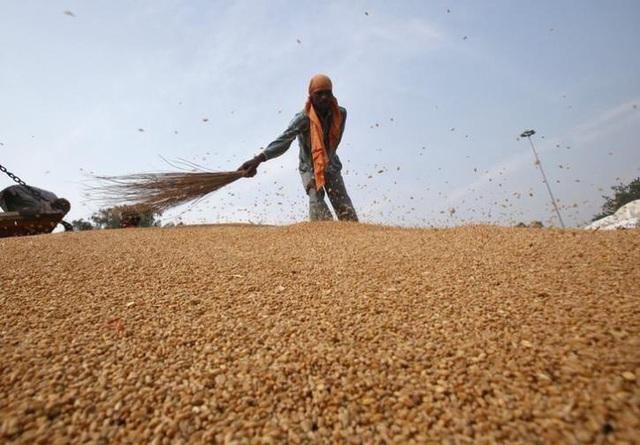 Chỉ số giá lương thực thế giới chạm mức thấp nhất trong 17 tháng qua - Ảnh 1.