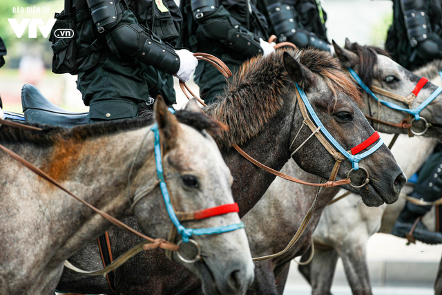 Đội tuấn mã của lực lượng Cảnh sát cơ động Kỵ binh: Nhỏ mà có võ - Ảnh 3.