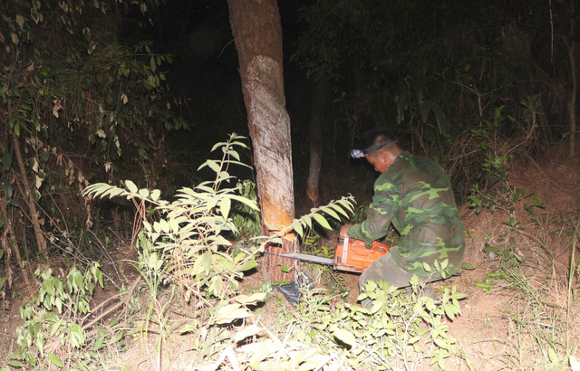 Nghệ An: Cháy rừng thông và keo ở xã Diễn Lộc lan rộng - Ảnh 1.