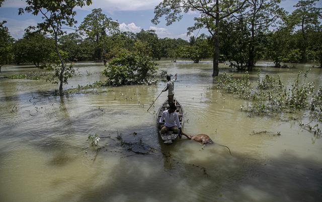 Ấn Độ: Lũ lụt nghiêm trọng tại Assam, hơn 100 người thiệt mạng - Ảnh 4.