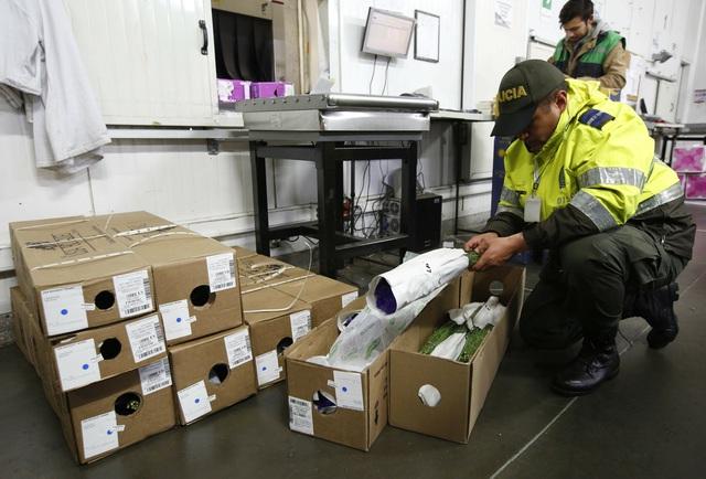 Thu giữ hơn 7,5 tấn cocaine trị giá hàng trăm triệu USD ở biên giới Mỹ - Colombia - Ảnh 1.
