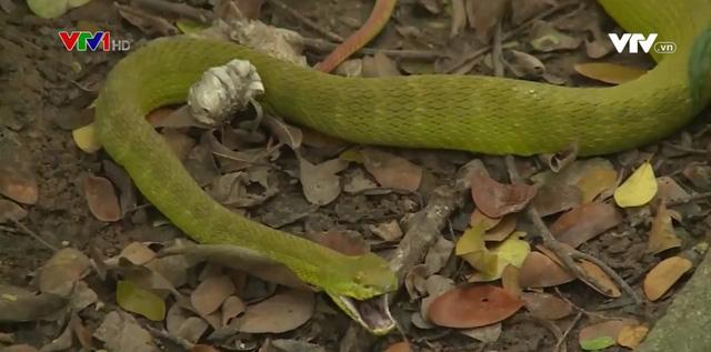 Nguy hiểm trực chờ khi rắn tràn vào vườn nhà trong mùa mưa - Ảnh 1.