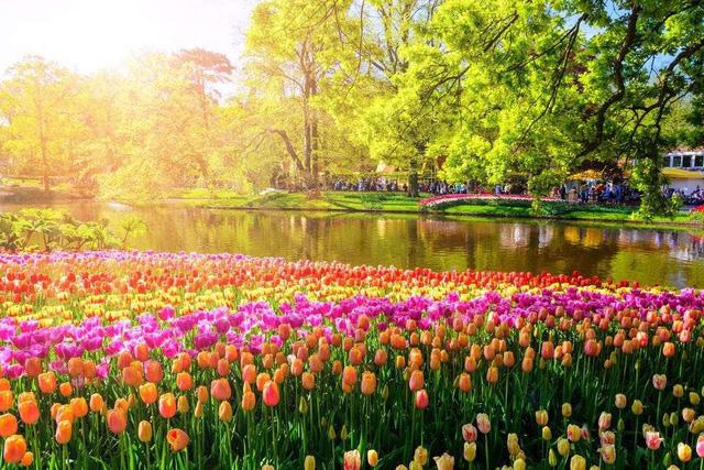 Ngất ngây, 10 cánh đồng hoa đẹp nhất thế giới - ảnh 1