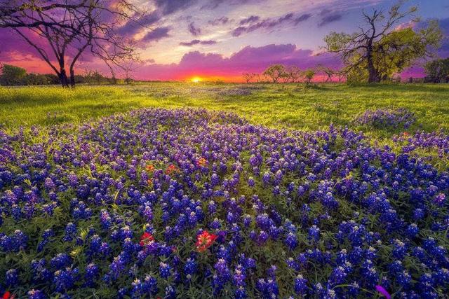 Ngất ngây, 10 cánh đồng hoa đẹp nhất thế giới - ảnh 2