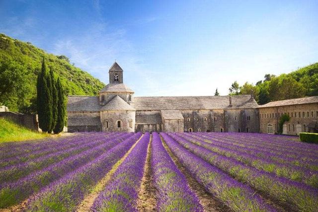 Ngất ngây, 10 cánh đồng hoa đẹp nhất thế giới - ảnh 3
