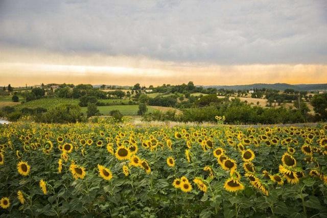 Ngất ngây, 10 cánh đồng hoa đẹp nhất thế giới - ảnh 7