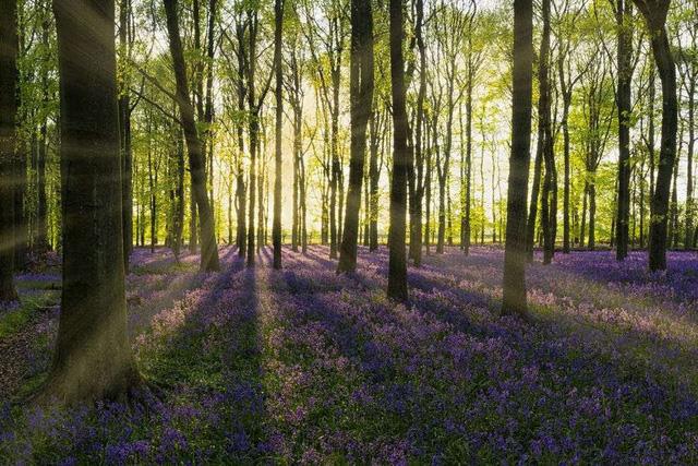 Ngất ngây, 10 cánh đồng hoa đẹp nhất thế giới - ảnh 9