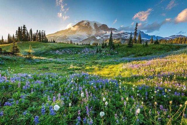 Ngất ngây, 10 cánh đồng hoa đẹp nhất thế giới - ảnh 10