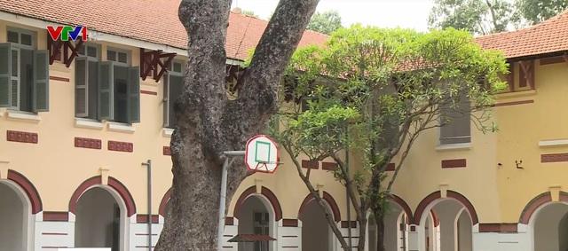 Sốc vì 237 triệu tiền cắt tỉa cây xanh ở 1 trường tại TP.HCM - Ảnh 1.