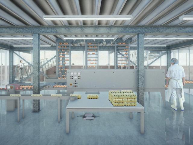 Ghé thăm trang trại gà khổng lồ trên nước tại Hà Lan - Ảnh 2.