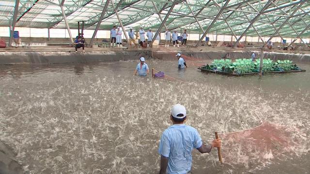 Nông sản Việt Nam sẵn sàng sang EU trước giờ G - Ảnh 4.