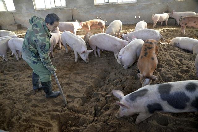 Mỹ chuẩn bị kịch bản virus cúm lợn G4 có thể thành đại dịch ở người - Ảnh 1.