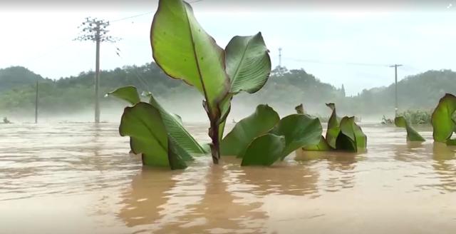 Lũ lụt, lở đất hoành hành từ Trung Quốc đến Nhật Bản  - Ảnh 2.