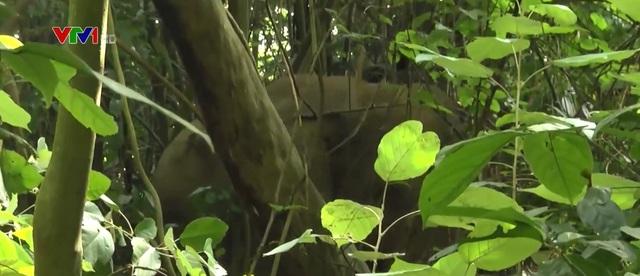 Voi rừng liên tục xuất hiện ở Đồng Nai - Ảnh 1.