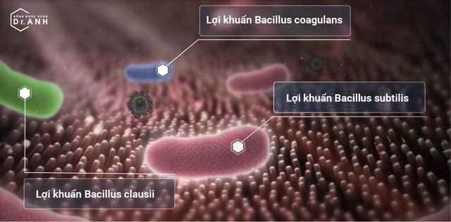 Sự thật về tác dụng của 3 chủng lợi khuẩn  Bacillus subtilis, Bacillus coagulans và Bacillus clausii - Ảnh 1.