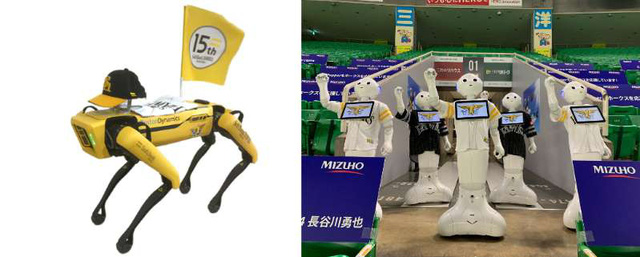 Bóng chày Nhật Bản mùa COVID-19: Khi robot thay thế cổ động viên - Ảnh 1.