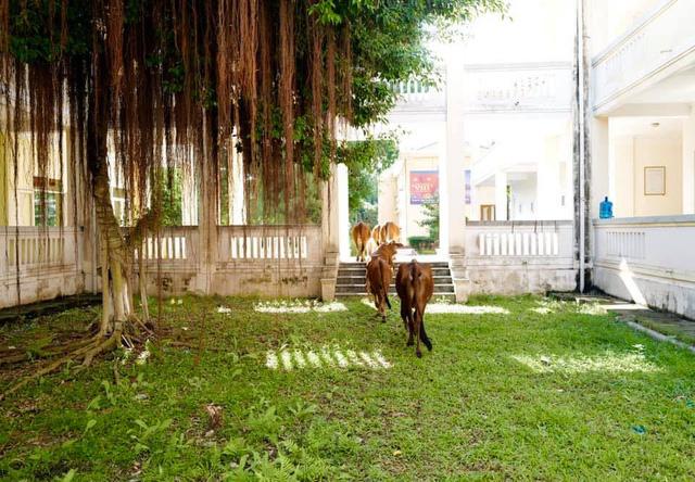 Diva Hồng Nhung và 2 con đang ở khu cách ly Quảng Ninh: Một trải nghiệm quý báu - Ảnh 1.
