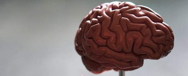 Não bộ của nam giới và nữ giới có khác nhau không? - ảnh 1