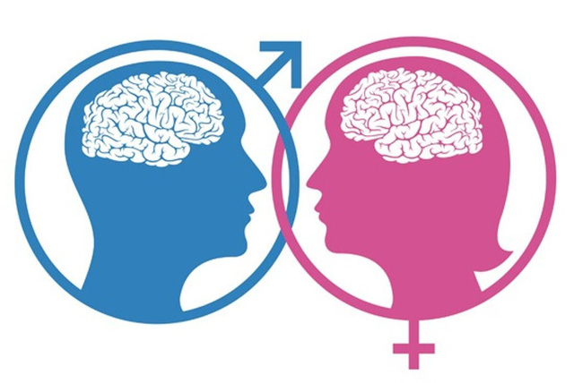Não bộ của nam giới và nữ giới có khác nhau không? - ảnh 2