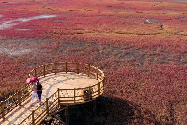 """Ngất ngây, vẻ đẹp mê hoặc du khách của vùng """"biển đỏ"""" (Trung Quốc) - ảnh 1"""