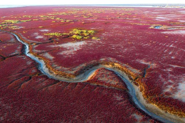 """Ngất ngây, vẻ đẹp mê hoặc du khách của vùng """"biển đỏ"""" (Trung Quốc) - ảnh 2"""