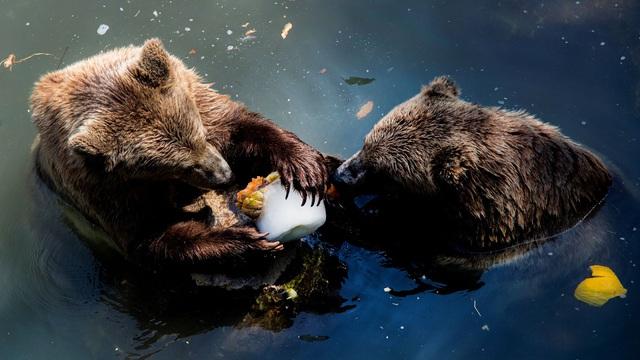 """""""Giải nhiệt"""" mùa hè, sở thú Italy phát kem cho động vật - ảnh 1"""