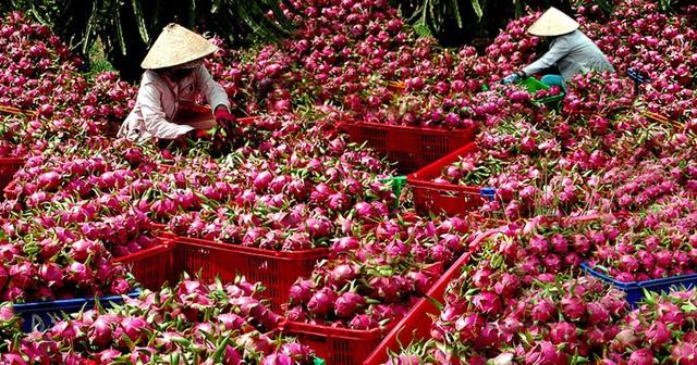 Gỡ khó cho trái cây Việt xuất khẩu sang Mỹ - Ảnh 2.