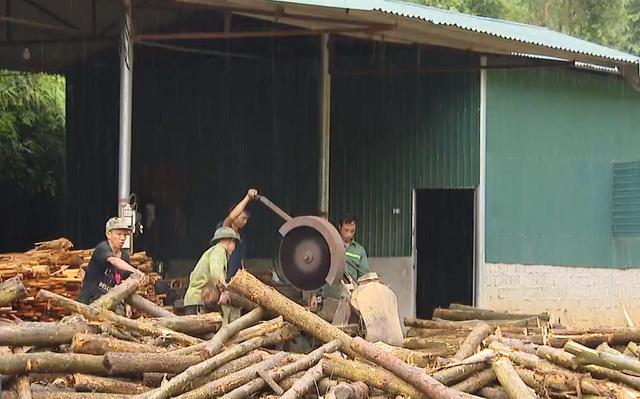 Giá bán gỗ nguyên liệu xuống thấp kỷ lục - Ảnh 2.