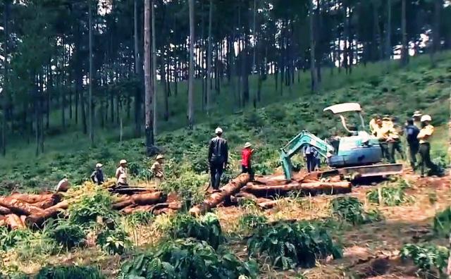 Hàng ngàn ha rừng thông bốc hơi khi vào tay đơn vị… bảo vệ rừng, trồng rừng - Ảnh 1.
