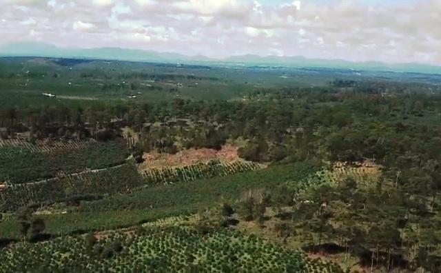 Hàng ngàn ha rừng thông bốc hơi khi vào tay đơn vị… bảo vệ rừng, trồng rừng - Ảnh 3.