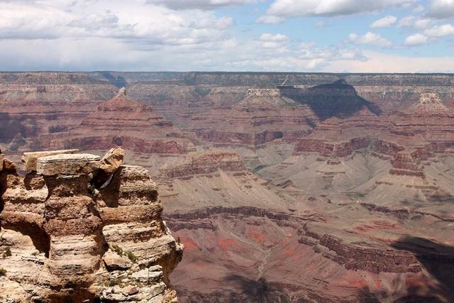 Tìm thấy hóa thạch 300 triệu năm tuổi - ảnh 1