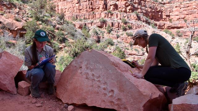Tìm thấy hóa thạch 300 triệu năm tuổi - ảnh 2