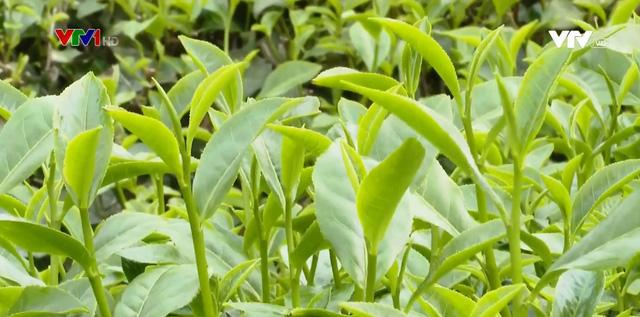Hàng nghìn ha cây trồng hồi phục sau mưa - Ảnh 1.