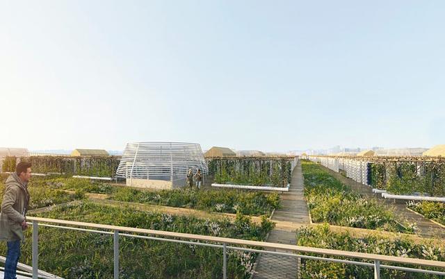 Khám phá trang trại thành thị lớn nhất thế giới trên nóc tòa cao ốc - Ảnh 2.